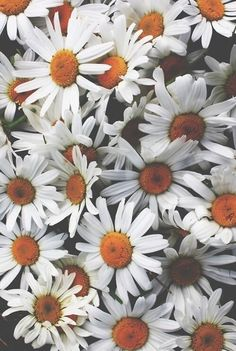 фон, цветы, гранж, природа, обои