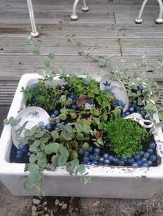 Belfast sink with plants and vintage crockery ♡ Belfast Sink Planter, Garden Sink, Vintage Crockery, Alpine Plants, Garden Structures, Cool Plants, Tea Pots, Outdoor Living, Succulents