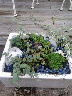 Belfast sink with plants and vintage crockery ♡ Belfast Sink Planter, Garden Sink, Vintage Crockery, Alpine Plants, Garden Structures, Cool Plants, Outdoor Living, Tea Pots, Succulents