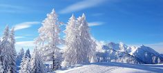 Winter Weather Forecast for Tree Hd Wallpaper, Blue Sky Wallpaper, Christmas Tree Wallpaper, Mountain Wallpaper, Scenery Wallpaper, Snowy Christmas Tree, Snowy Trees, Winter Trees, Winter Weather Forecast