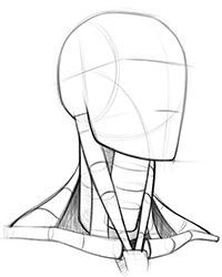 drawing the neck using cylinders