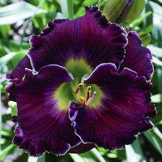 Gardening For Beginners, Gardening Tips, Organic Gardening, Gardening Gloves, Indoor Gardening, Gardening Websites, Balcony Gardening, Urban Gardening, Gardening Supplies