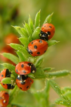 Photograph ladybugs by © Rasa OM on 500px