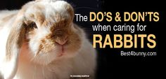 The Do's & Don'ts of how to care for rabbits today Find them here... http://best4bunny.com/rabbit-care-dos-donts-look-rabbits-today/