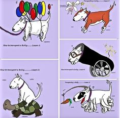 How To Transport A #Bully:)