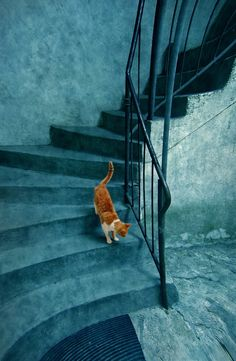 The blue daily round of one orange cat by Dimitar Lazarov