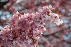 Kanpai repart en voyage au Japon dès demain ! - http://www.kanpai.fr/japon/kanpai-repart-en-voyage-au-japon-des-demain.html