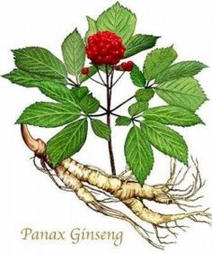 The Amazing Health Benefits of Ginseng http://DrJockers.com