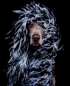 William Wegman Dogs | William Wegman3 650x795 Dogs Photography by William Wegman