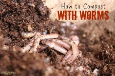 How to Compost with Worms - DailyPea.com