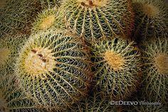 Site: www.edeevo.com Buy: www.etsy.com/shop/edeevo Like: www.facebook.com/eDeevoPhotography View: www.flickr.com/photos/edeevo