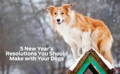 Riley Rants - Licking Calcutta: 5 New Year's resolution to make with your dogs