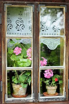Geraniums in window Reminds me of Europe I remember being delighted by the flowers and lace in windows of England, France and Germany in particular :) Cottage Windows, Old Windows, Windows And Doors, Cozy Cottage, Cottage Style, Garden Cottage, Jardin Decor, Lace Curtains, Stenciled Curtains