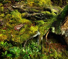 """""""Froggy on Moss"""" 8x10 photograph by Tammie Bowden"""