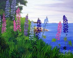 Maine Bay Lupine Flowers by Laura Tasheiko
