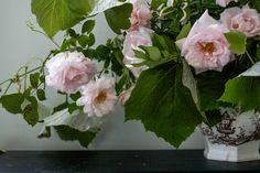 With a DIY bouquet of climbing roses, Justine captures the salubrious fragrance of a Cape Cod summer. Follow her step-by-step instructions to take your climbing roses from trellis to vase: