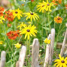 Happy sunny Donnerstag!! ☀️Im September dürfen auch gelbe und orange Blumen im…