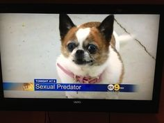This dog who cannot DEAL in the face of these baseless accusations.