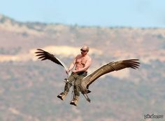 Your daily dose of memes, weird stuff, people falling, kittens, and of course a few more hot girls. Chicken Cat, Russian Memes, Nerd Jokes, Funny As Hell, Vladimir Putin, Weird Pictures, Me Too Meme, Try Not To Laugh, Bald Eagle