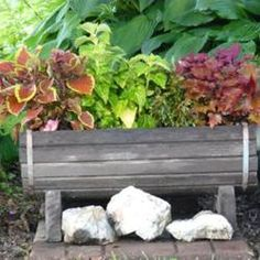 Coleus in a trough. Lots of idea on this thread!