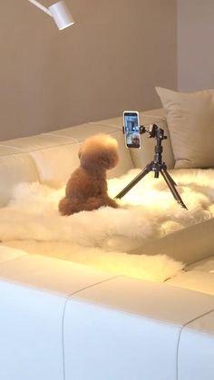 Super Cute Puppies, Baby Animals Super Cute, Cute Baby Dogs, Cute Funny Dogs, Cute Little Animals, Cute Funny Animals, Baby Animals Pictures, Cute Animal Videos, Cute Animal Pictures
