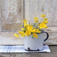 freshly picked buttercup flowers  enamelware
