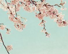 Cherry blossom tree - fine art photography print - botanical print mint teal pink aqua summer photograph