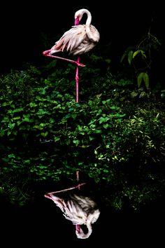 Veja 20 imagens finalistas da Premiação Mundial Fotográfica da Sony - 2016