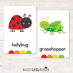 Spring Flash Cards  36 Spring Vocabulary by BusyLittleBugsShop
