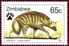 Aardwolf (Proteles cristatus) Zimbabwe1998