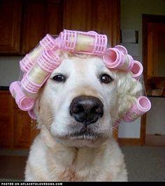 Hairapy