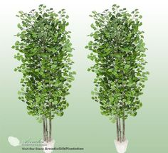 TWO 6' Artificial Gingo Trees with Real Wood Trunks -- Check out the image by visiting the link.