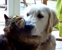 Está padrísimo: Súper tierno: Gato y perro, Esto es amor