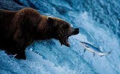 Resultado de imagem para Ursos