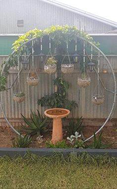 An old trampoline frame with some chicken wire to grow a passionfruit vine and t. Recycled Trampoline, Garden Trampoline, Old Trampoline, Trampoline Springs, Trampoline Ideas, Trampoline Parts, Trampolines, Diy Pergola, Backyard Fences