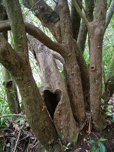 Heart Shaped Natural Fairy Home