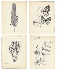 pencil and ink studies by paula mIlls | Flickr - Photo Sharing!