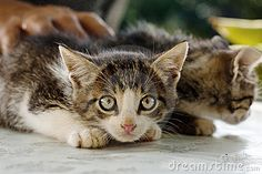 Does your cat hide under the sofa each time the doorbell rings? Its hair bristles at the mere sight of another cat or a dog? Then one ...