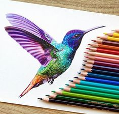 Pin by brooklyn on art hummingbird drawing, hummingbird tattoo, color penci Hummingbird Illustration, Hummingbird Drawing, Colorful Hummingbird Tattoo, Hummingbird Tattoo Watercolor, Bird Drawings, Animal Drawings, Cool Drawings, Drawing Birds, Color Pencil Drawings