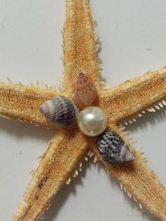 Corsage zeester met kleine schelpjes