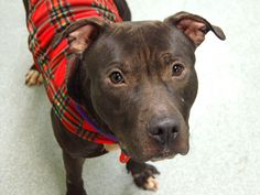 TO BE DESTROYED - 12/21/13  Manhattan Center  My name is SMOKE. My Animal ID # is A0987558.  62 lbs (quite thin), He's FRIENDLY w/ other dogs, children AND strangers, house trained,  knows when to sit. GENTLE, calm attitude and nothing but friendship for everyone he meets. Some food guarding-common for strays, retrainable!  This handsome boy needs a hero tonight.