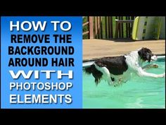 Remove Background Around Hair in Photoshop Elements 11, 12 and 13 | The powerful Edge Detection feature in Photoshop Elements lets you make selections around hair and other fine detail. Now it...