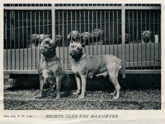 boxer kennel 1908 b  uit tijdschrift Buiten 1908