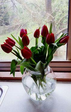 Tulipány...:)