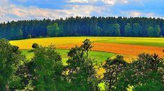 Vibrant Fields