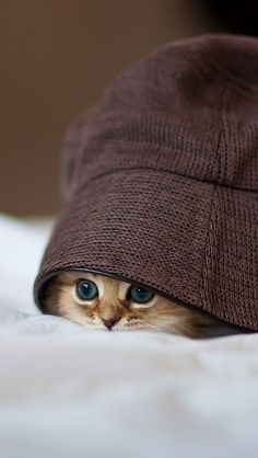 let me hide under a hat - cute #cats #photography #cuteanimals