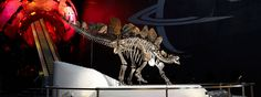 Earth Hall and Stegosaurus