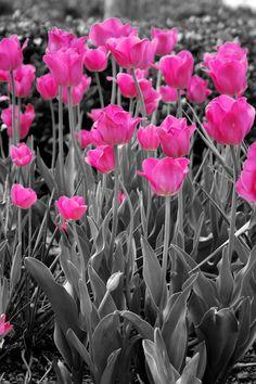 Selective Colour Flowers by YuriPanda via pxleyes.com