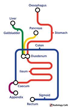 London Underground Tube Map, London Tube Map, London Map, Human Digestive System, Creative Infographic, Original Quotes, Writing, Eye, Anime