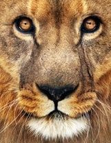 In like a lion..Marc